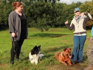 Hundetrainerin Simone beim Kopfhalftertraining in Bremen