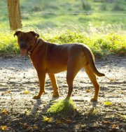 Mensch und Hund trainieren über Sichtkontakt