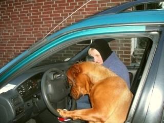 Praktische Prüfung für den Hundeführerschein in Bremen