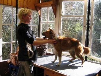 Obedience – Training auf Augenhöhe mit Präzision und Körpersprache als Kommunikationsmittel